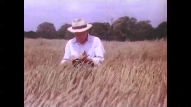 1950s:  man with hat and notebook walks around wheat field, inspects grain and writes notes on farm in countryside.