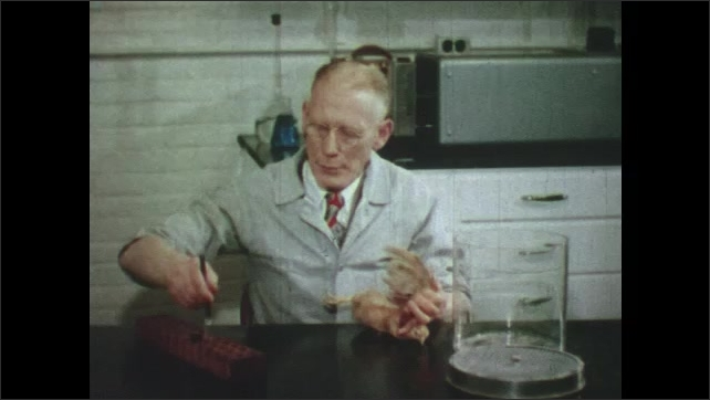 1950s: Man pours egg into petri dish. Man injects chicken with shot. Hand picks tomatoes.