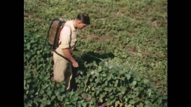 1950s: Man sprays pesticide on plants. Man takes soil sample next to plant. Man cracks eggs into dishes in lab.