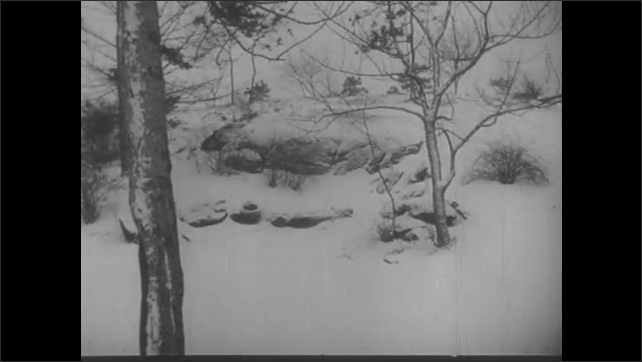 1940s: Snowy road amidst trees. Small trees, rocks in snow. Frozen stream. Clouds in sky.