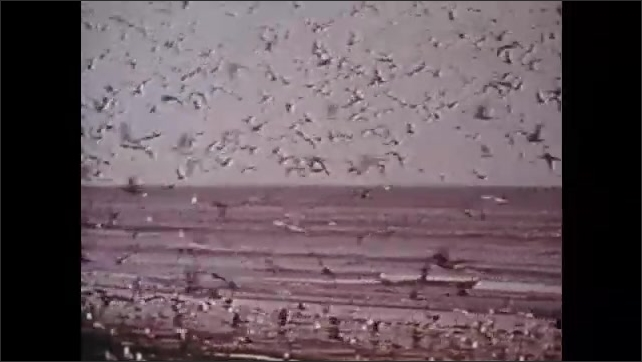 1970s: Seagulls fly over beach and ocean. Sun shines through clouds.