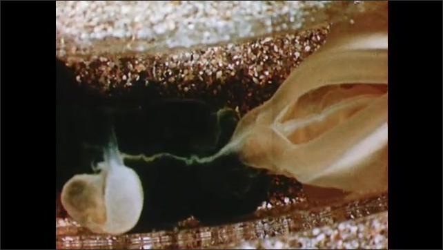 1960s: Inner working of tube worm.