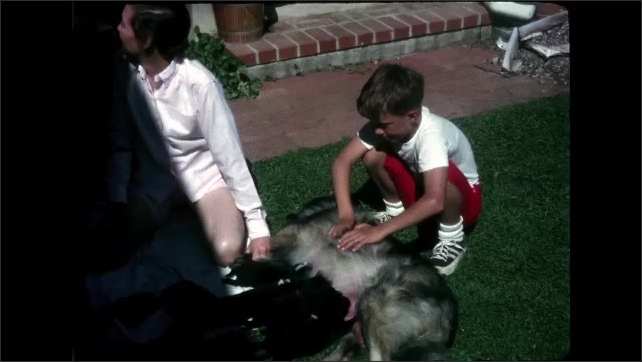 1960s California: Woman and kids sitting with puppies on grass. Woman and boy sitting with dog nursing puppies. Boy and girl pet nursing dog.
