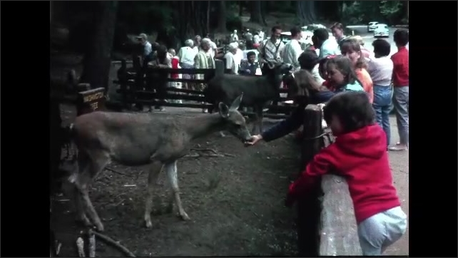 1960s: Fawn eats food from child's hand. Fawn eats grass. Fawn walks pass sign in front of tree. People feed deer's in fenced in area. People hang out in forest.