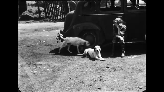 1930s Buffalo NY: girl bounces in saddle while riding trotting horse, horse turns, woman sits on car running board with Dalmatian, 2nd Dalmatian runs up, sniffs, wags tail, woman pets Dalmatian