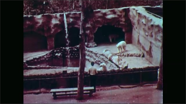 1950s: UNITED STATES: Sloth bear drinks water from stream. Polar bears in enclosure. Man watches polar bears. Water fills pool.