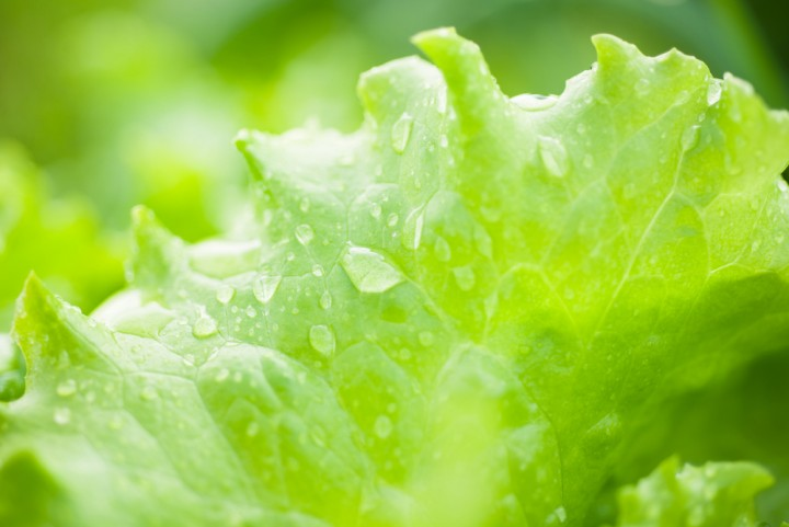 lettuce is actually healthier than kale on the nutrient density scale