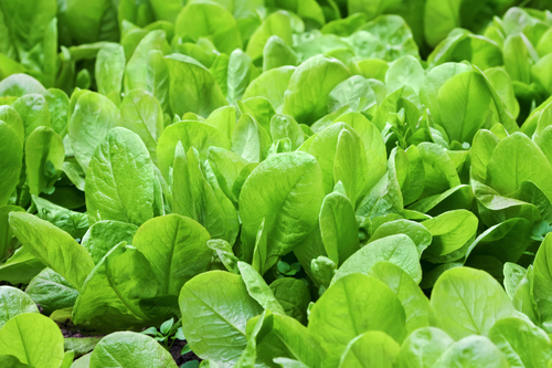 spinach is another healthy food on this planet