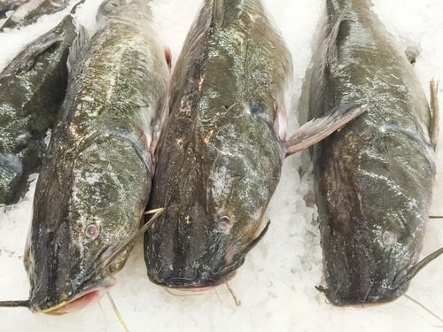 imported catfish are among the fish you should never eat
