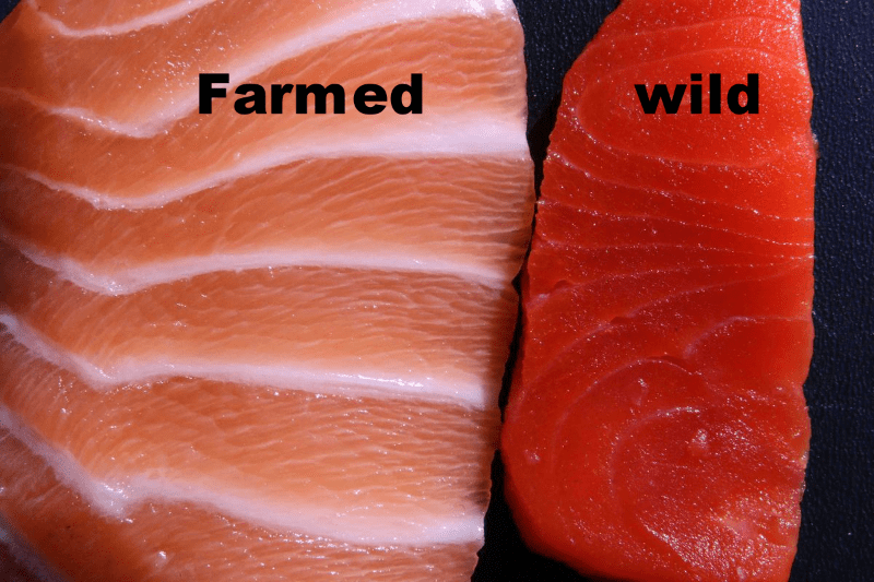 difference between wild caught and farm raised salmon