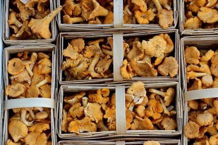 edible medicinal mushrooms