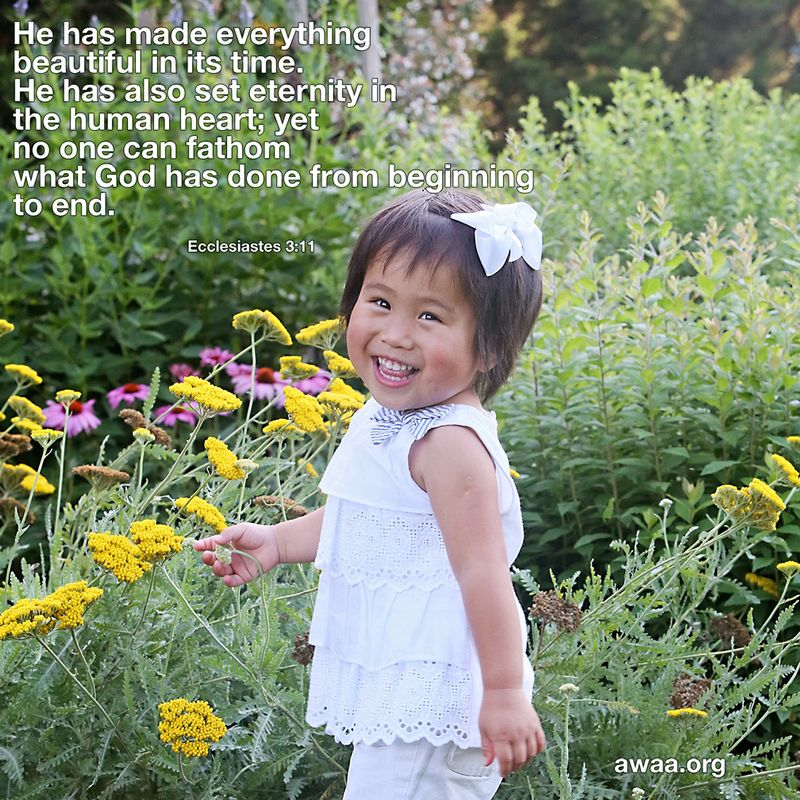 Ecclesiastes 311 FB