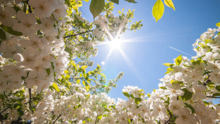 Spring-Wallpapers-2014