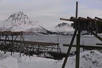 Visrekjen aan het Gimøyfjord