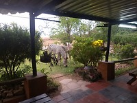 Zebra,s op het terras