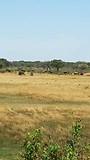 Olifanten bij de camping