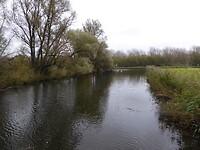 waterhout2