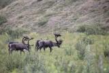 6) kariboe\'s