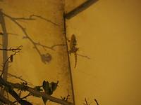 Salamander op de muur bij het restaurant