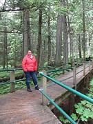 Grote cederbomen tijdens onze wandeling