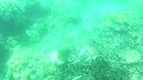 zwemmen met de loggerhead schildpad