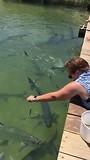 Vissen voeren