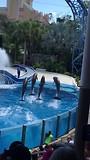 Seaworld: de dolfijnenshow