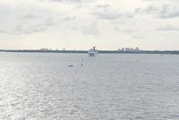 Meerdere boten varen de haven uit.