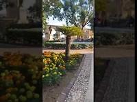 The garden in Valletta