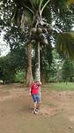 Kijk uit voor vallende kokosnoten