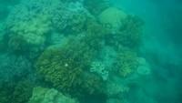 Snorkelen met vissen boven het koraal