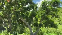 Stukje natuur Nusa Pineda