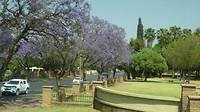 Pretoria  paarse bomen de Jakaranda boom