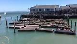 Zeeleeuwen Pier 39