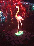 Een shiny flamingo