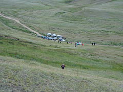 Een kudde busjes op zoek naar de kudde Przewalkipaarden