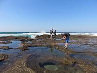 koraal en levende aquaria in Ponta do Ouro
