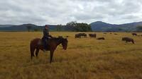 paardrijden in Swaziland tussen de 'Wildebeesten'
