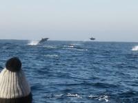 Dolfijnen!