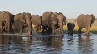 Attack off the wild elephants.