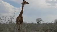 Girafje 😍