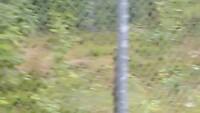 Wolvenjongen met konijn in berenpark Orsa.