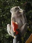 Apen lusten ook MC D