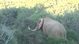 In Kariega Game Reserve