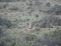 In Addo Elephant National Park met Dennis