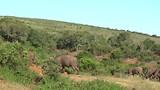 In Addo Elephant National Park, Buffels