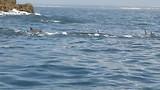 Walvissensafari bij Raggy Charters, Dolfijnen