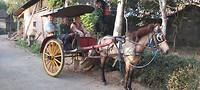 In de paardenkoets