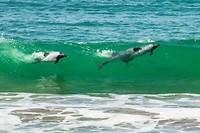 16. Dolfijnen