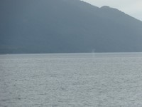 Vanaf de boot: walvissen in zicht!